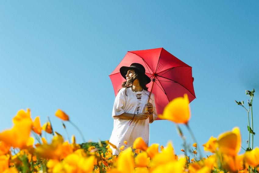 umbrella for sun